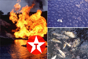 Burning well, dead butterfly in crude oil, dead fish in river